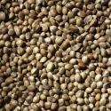 Florihana Hemp Seed Oil BIO (200ml)